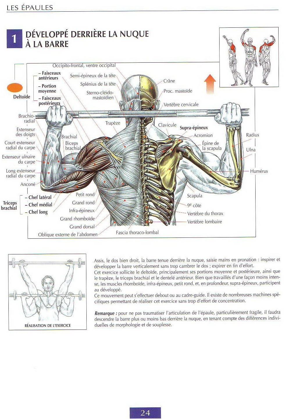 Shoulders best exercices guide de musculation for Guide musculation