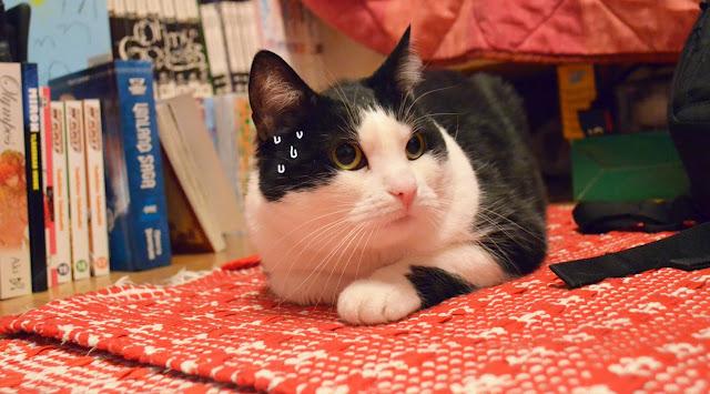 kissa paniikissa