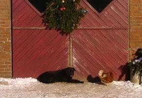 Hund und Huhn im Winter