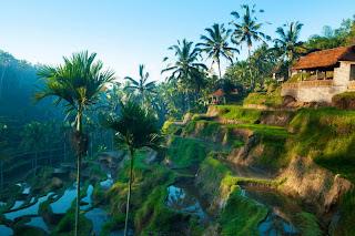 ubud bali,ubud,indonesia,bali ubud,nature+image,indonesia ubud bali
