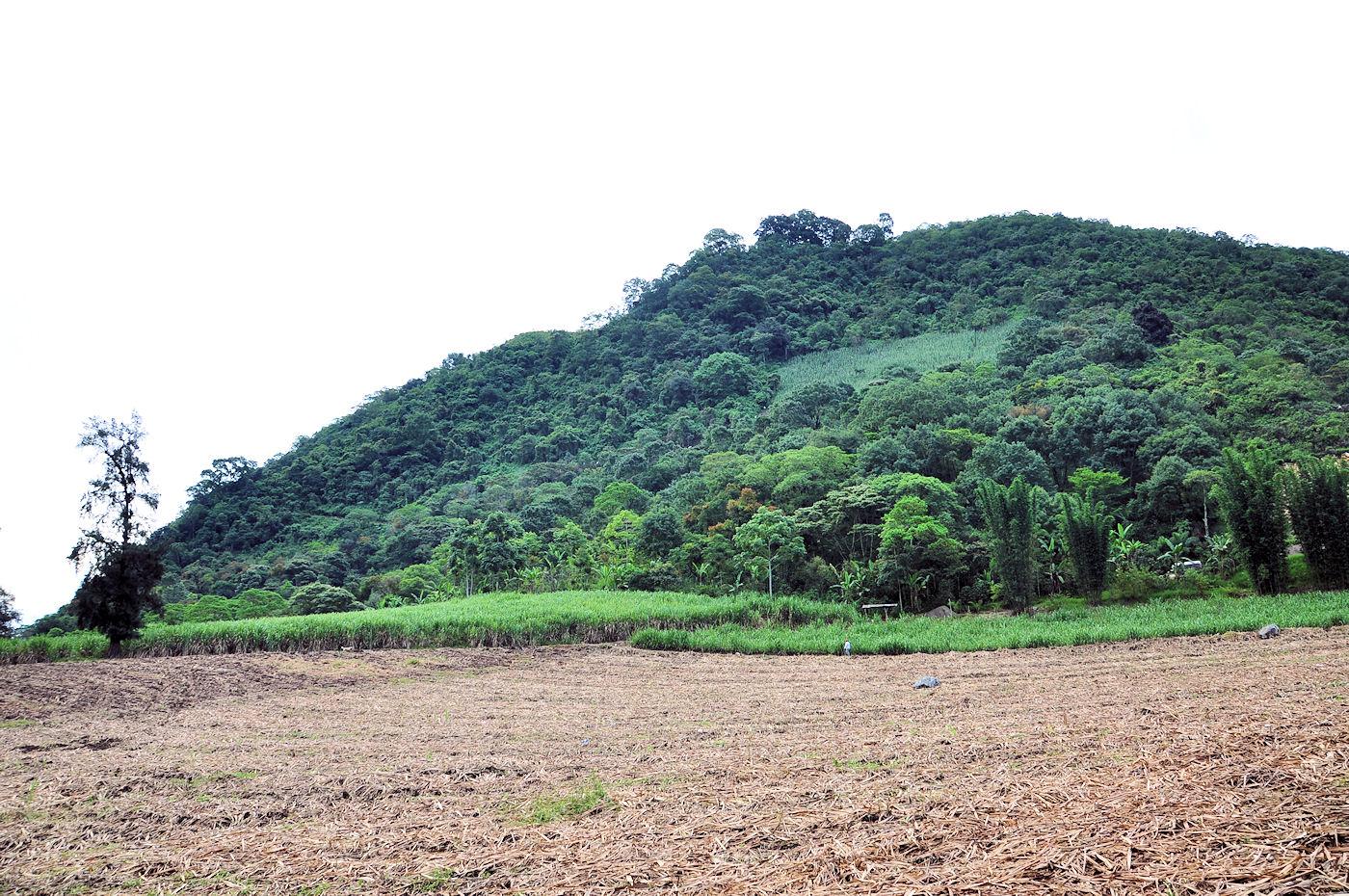 Chayotes, Caña de Azúcar y Paisajes de Chocamán, Veracruz.