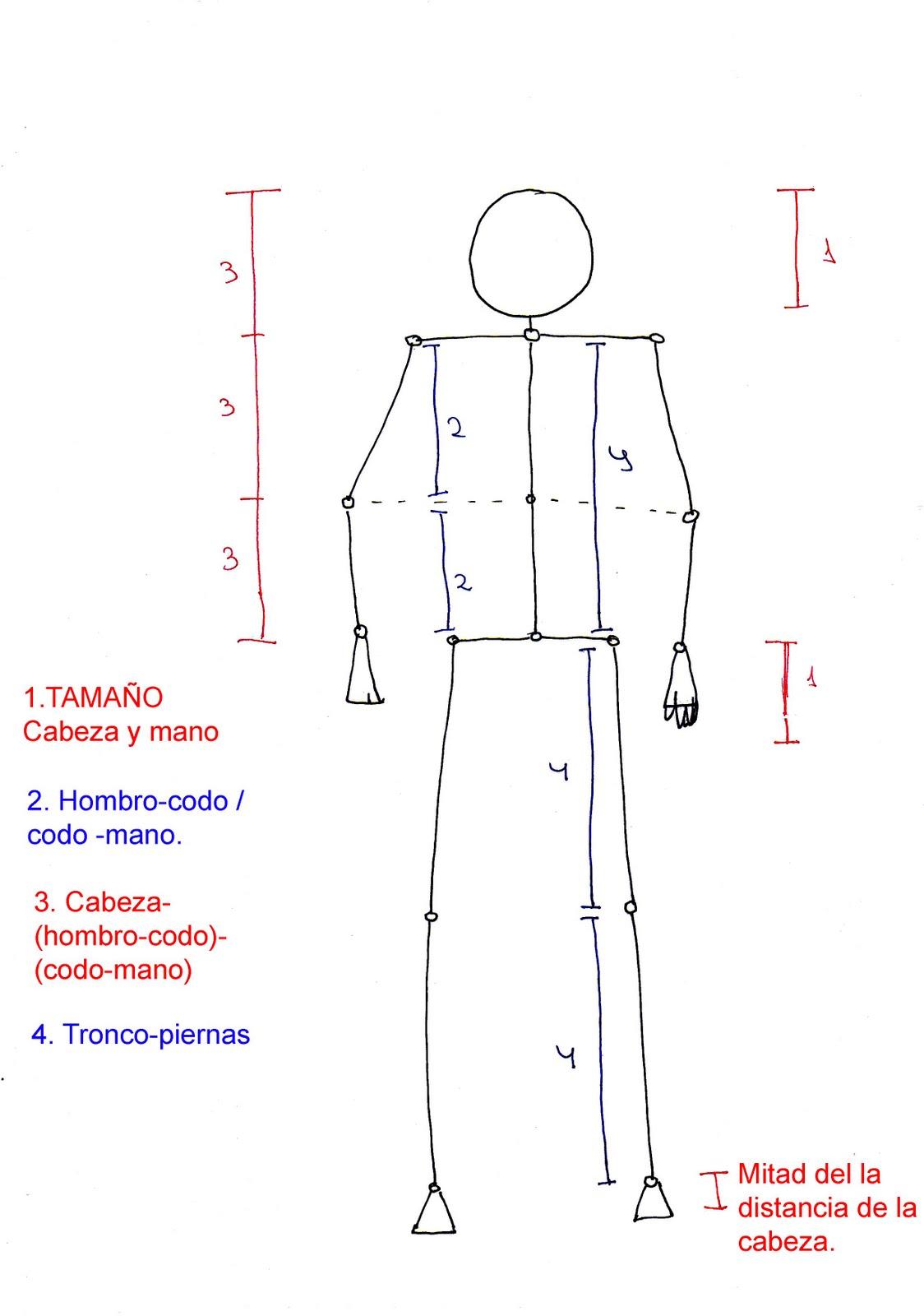proporciones+del+cuerpo.jpg