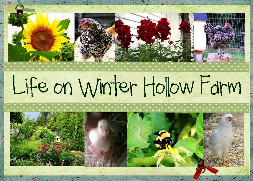 Life on Winter Hollow Farm