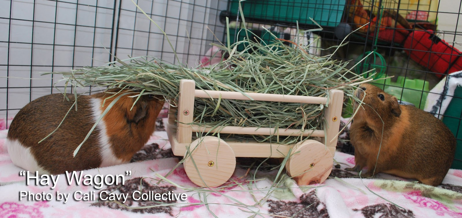 Cali cavy collective a blog about all things guinea pig wooden if you would like to order one for your guinea pig or find out more check out wheek boutique on etsy or email guineapighousesyahoo jeuxipadfo Gallery
