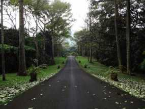 Suasana Di Kebun Raya Purwodadi, Pasuruan