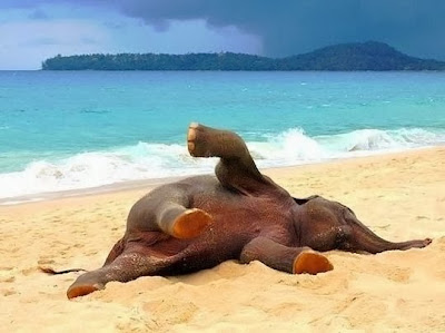 Funny Animal On The Beach Interesting Latest Profile Funny And Cute Animals