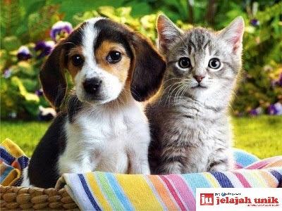Hayo Tebak! Lebih Pintar Anjing atau Kucing