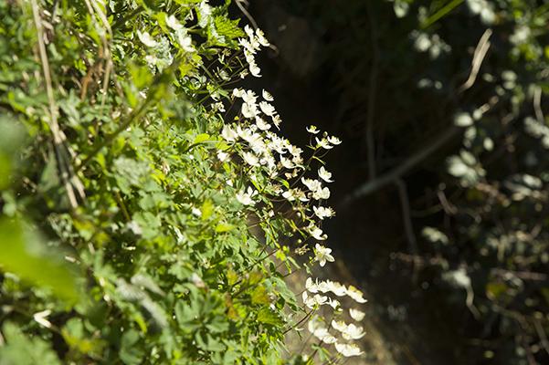 Macrophotographie avec fond sombre pour mettre en valuer les fleurs
