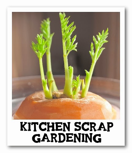 Grow Fruits And Vegetables From Kitchen Scraps: Grow Vegetables From Kitchen Scraps