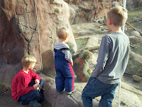 baboons, zoo, Toronto Zoo, kids, animals