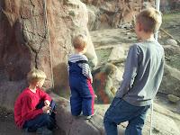 baboons, zoo, Toronto Zoo, kids, animals