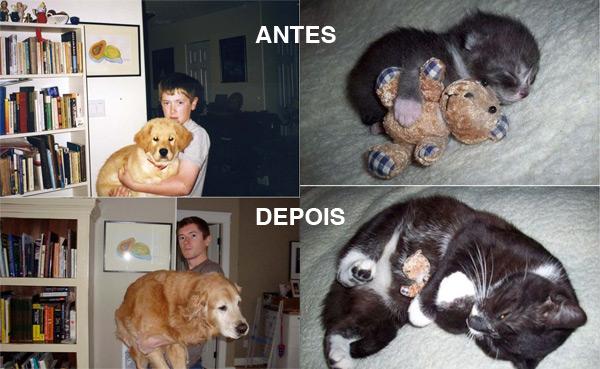 Cão e gato antes e depois