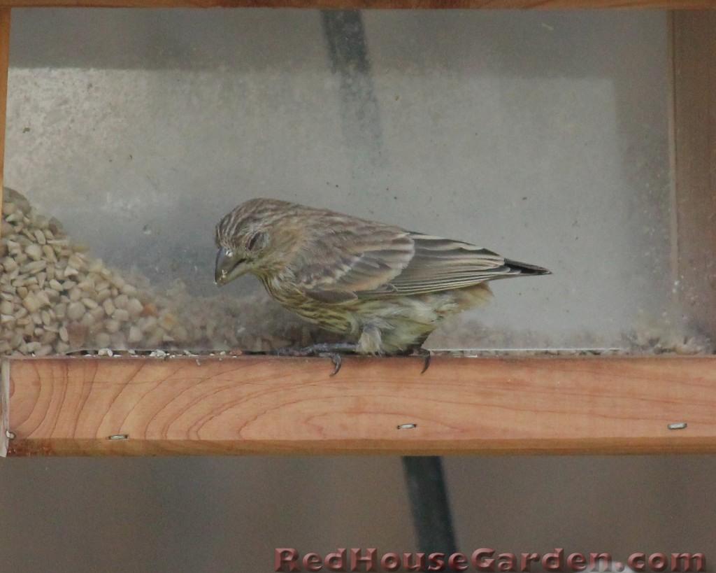 how to take apart a bird feeder