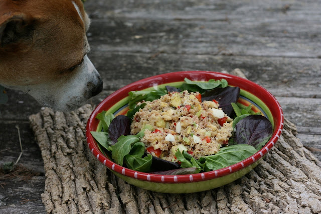 dog in salad
