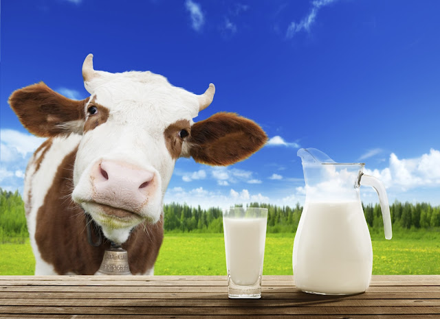 benefits of cow milk. is milk is good for health
