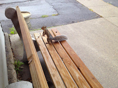 With Winter Ahead We Gave Peanuts to a Local Squirrel Who Was Quite Grateful