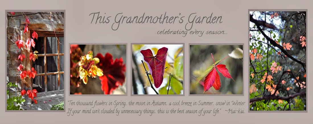 This Grandmother's Garden