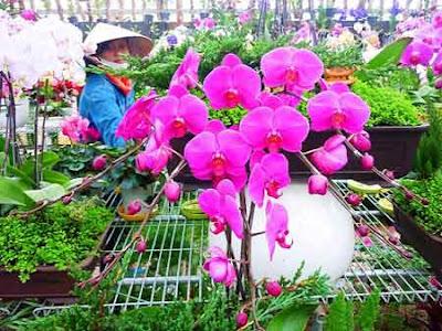 phan phoi hoa da lat gia vuon