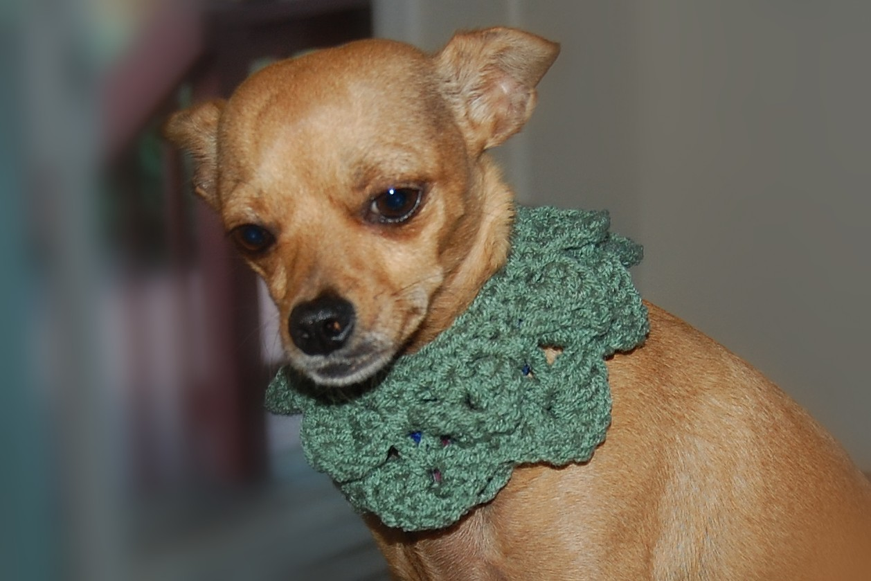 Posh Pooch Designs Dog Clothes: Crocodile Stitch Dog ...