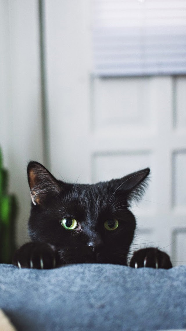 Black kitten claws iphone 6 wallpaper