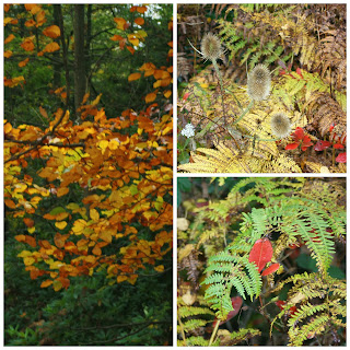 Nature-Autumn-Gallery-Trees