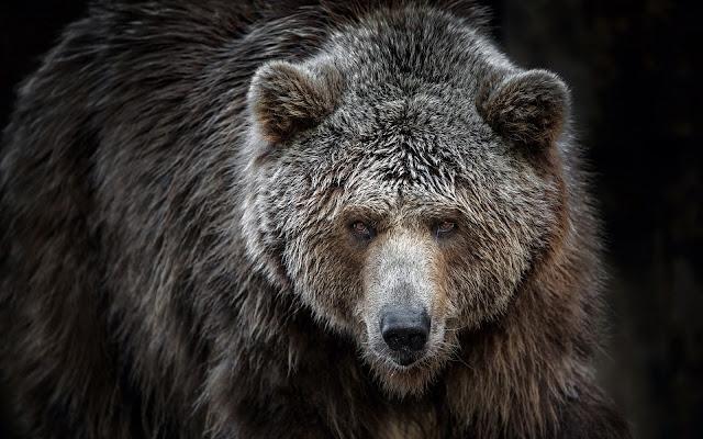 LA CIENCIA DE LA VIDA Somos osos