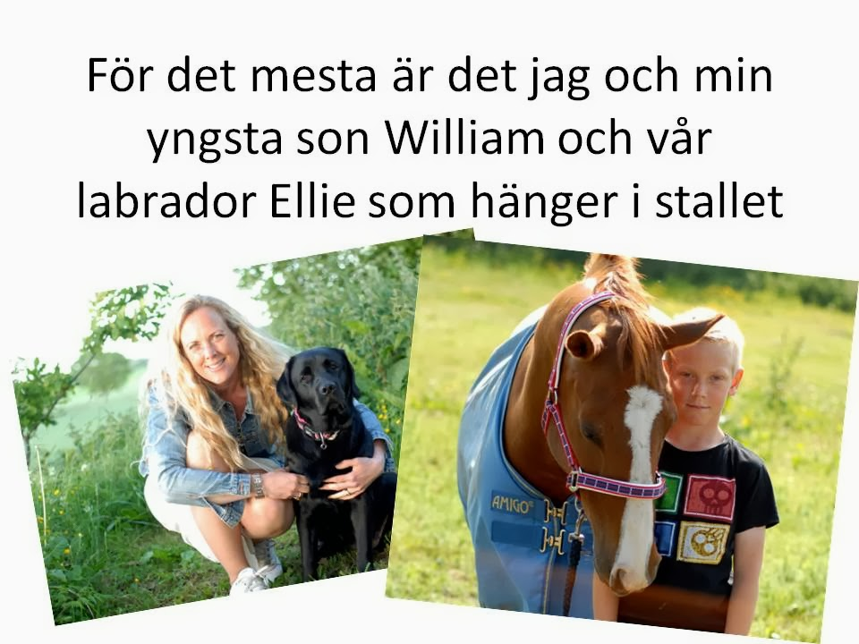Vi i stallet