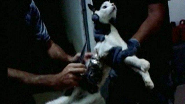 cat arrested in brazil