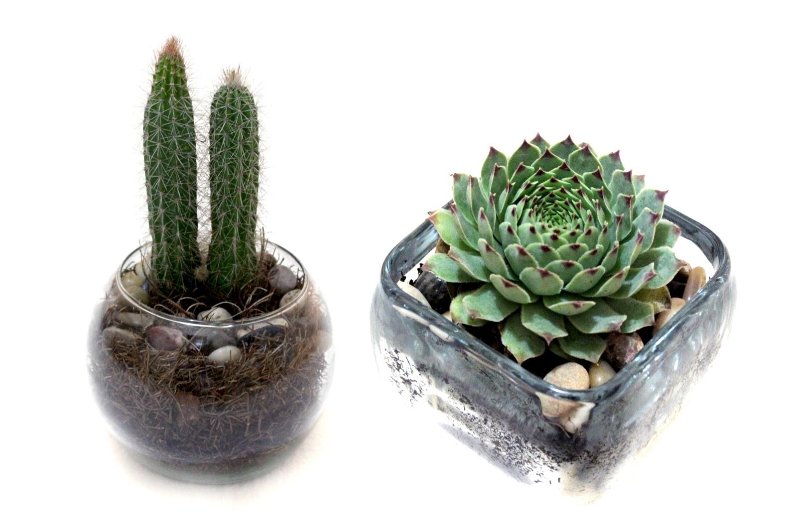 regala una planta regala vida quiz ustedes no lo saben an pero soy una fantica de todo tipo de plantas en especial de las plantas desrticas ya que