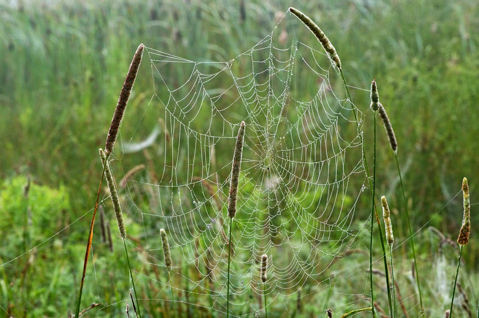Nova Scotia; Spider; Web