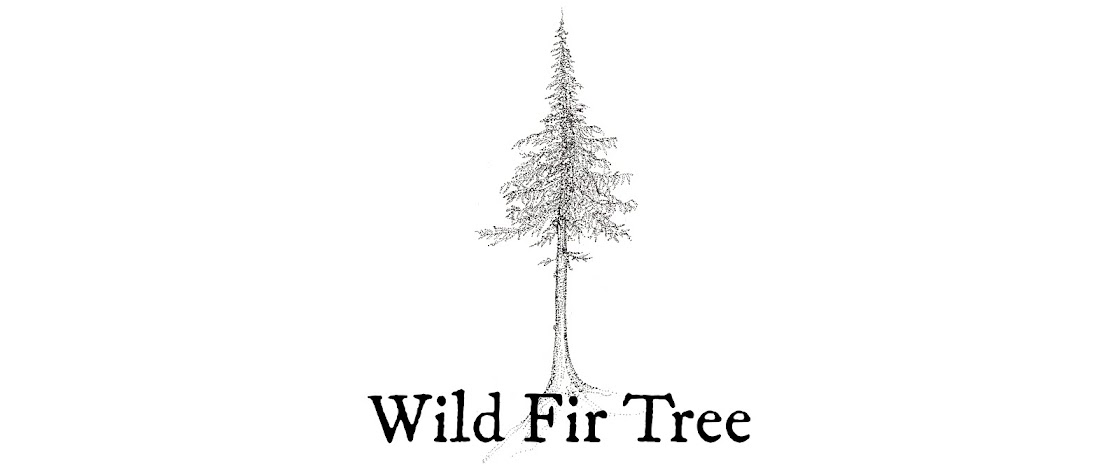 Wild Fir Tree