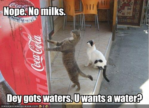 Give me some coke please - funny cats