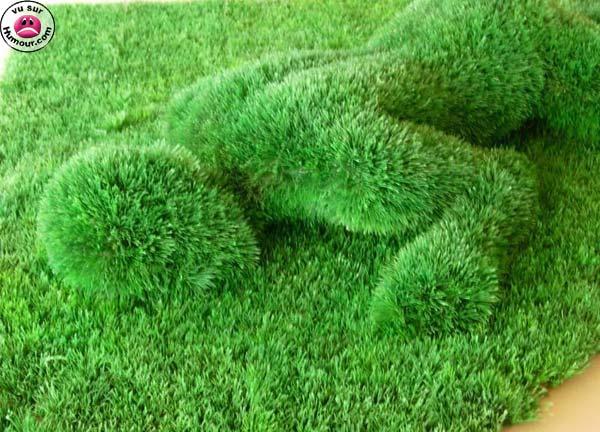 Cora oquepulsa reinado de grama for Tipos de cesped natural para jardin