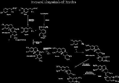 Biosintesisi de emetina cefalina