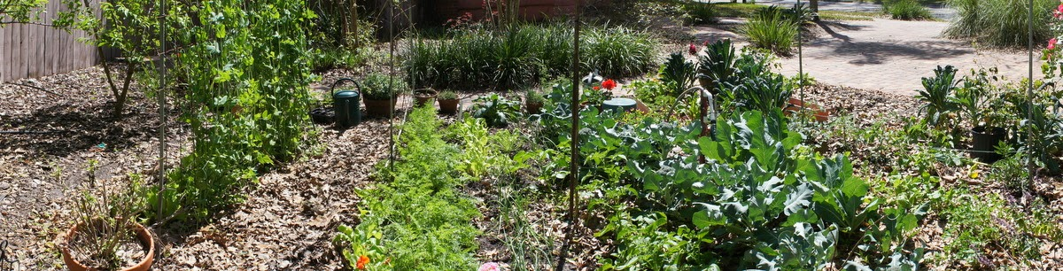 Gardening in Central Florida: Mid-March in the Central Florida Garden