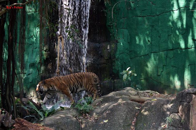 Santai Gambar Di Zoo Melaka