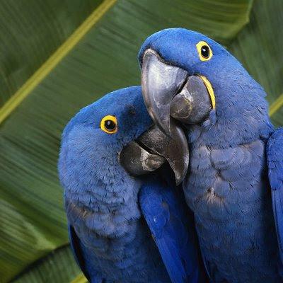 Parrots Bird Picture