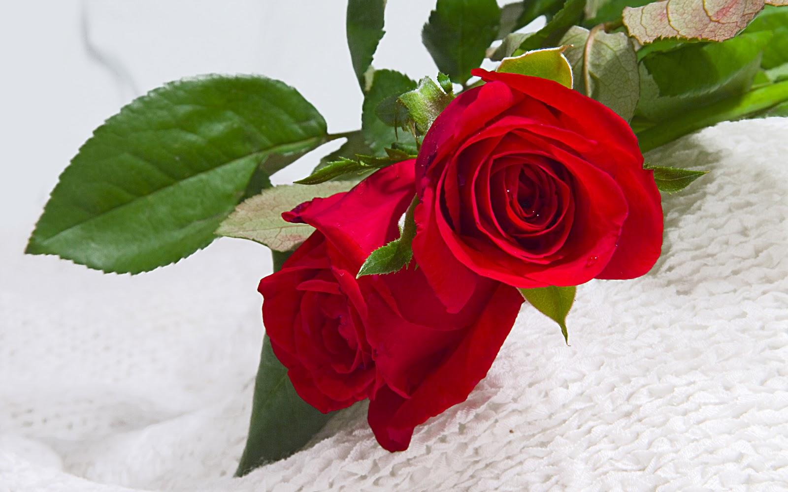 Wallpaper Flower Rose Love Hd