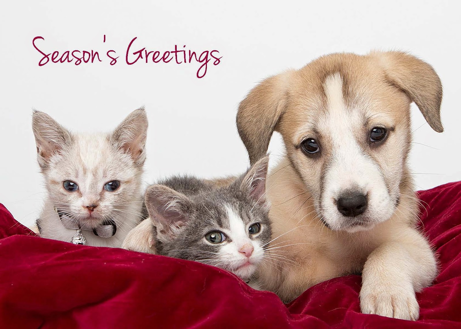 Cat chat with caren and cody help make homeless animals wishes cards from michigan humane to send my wishes for a warm holiday and now they have become part of my holiday routine in fact i am ordering some for m4hsunfo