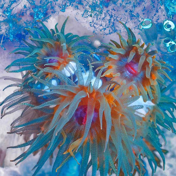 Colorful Marine Life Of Indonesia