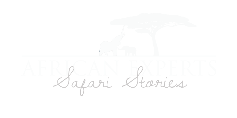 African Experts - Safari Stories