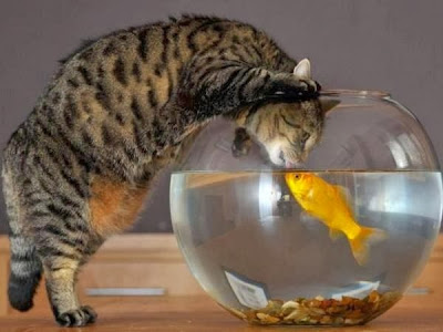 cat kissing a goldfish