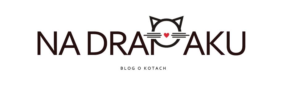 Na drapaku - Blog o kotach