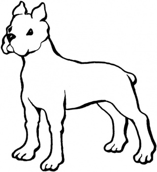 Boxer Coloring Pages