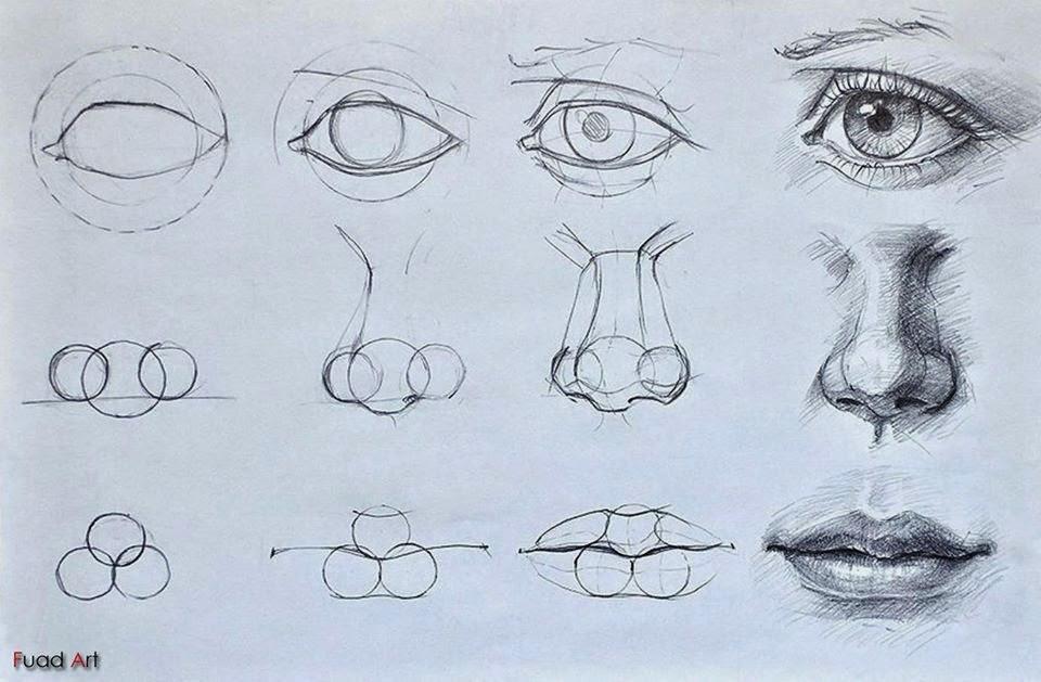 Поэтапные урок рисования карандаш
