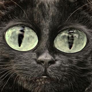 cat photography techniques