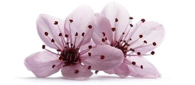 Blodblomme-blomster