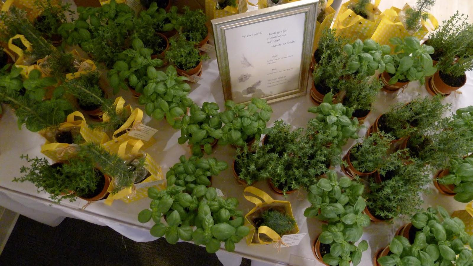 Backyard Garden : Thyme, Basil, Spruce Tree Seedling Wedding Favors