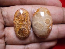 Manfaat dan Khasiat Batu Sarang Tawon