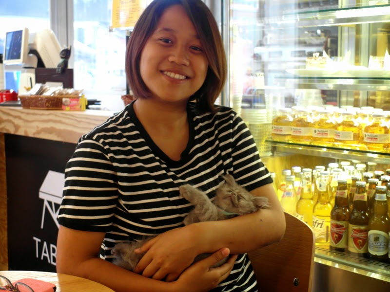 Ewha Summer Studies Table A Cat Cafe Seoul South Korea lunarrive travel blog